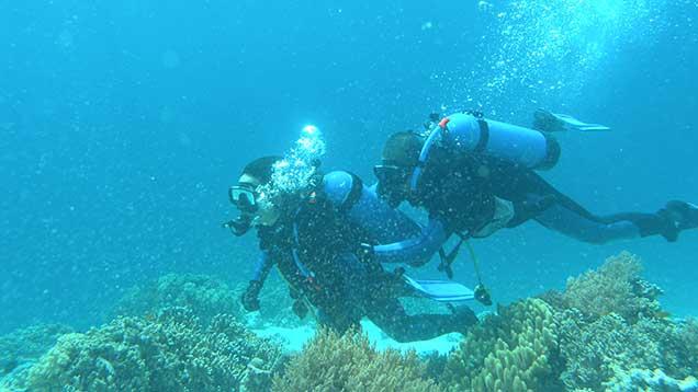 scuba diving at the menjangan