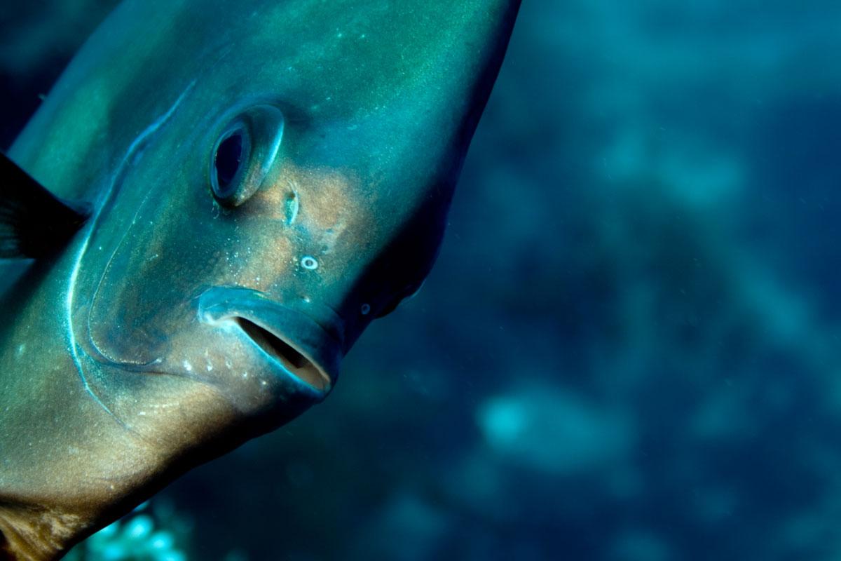 best diving season in bali